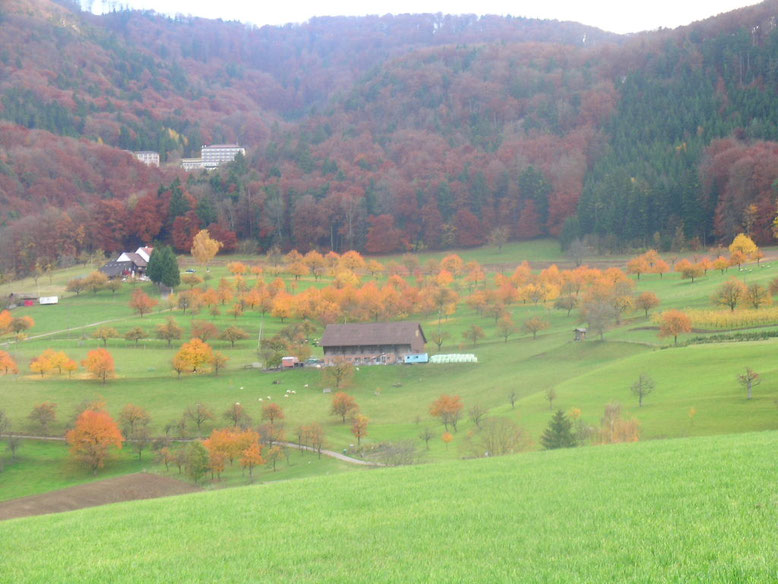 Stall Bitterli im Herbst