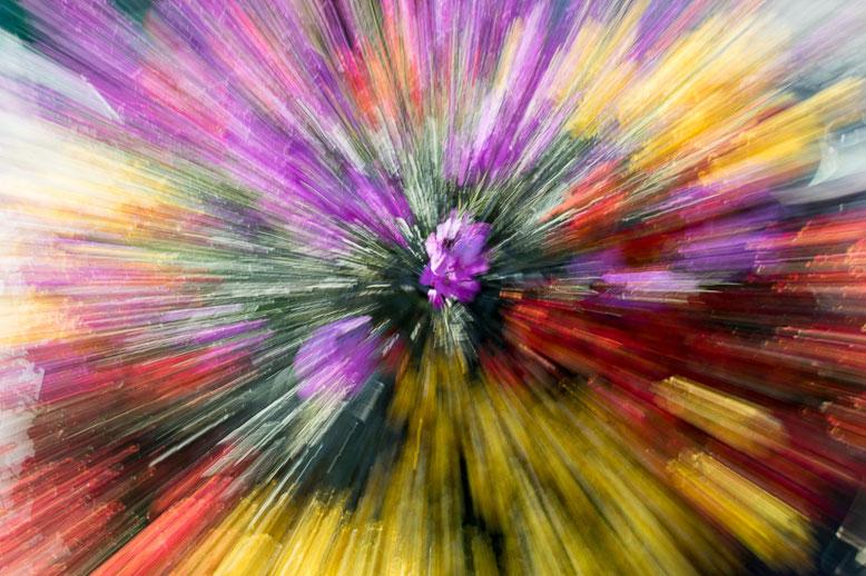 683.069 © 2015 Alessandro Tintori • Meditazione e fotografia con la psicologa Daniela Bovo • Domenica 29 settembre 2019 • Sperongia (PC)