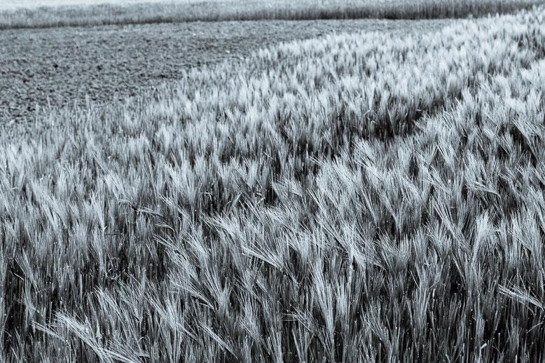 680.077 © 2015 Alessandro Tintori - C521 Stage di fotografia di paesaggio in Monferrato.