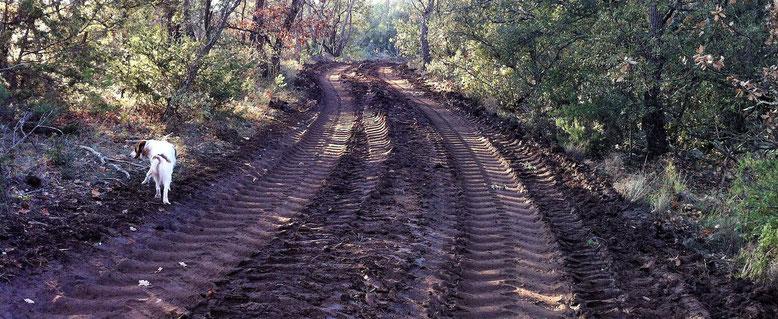 les coupes en forêt nécessitent le passage de gros engins (photo Didier Lesoil)
