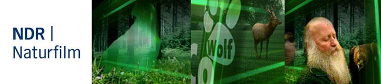 """Dirk Hensiek entwickelte im Auftrag des NDR (NDR-Naturfilm) in Zusammenarbeit mit der Fernsehjournalistin Nadja Frenz das TV -und Sendedesign ,,Wolf, Bär und Co''  Deutsche Erstausstrahlung: 10.04.2007 Das Erste Schauplatz der 30 Folgen """"Wolf, Bär & Co"""" i"""
