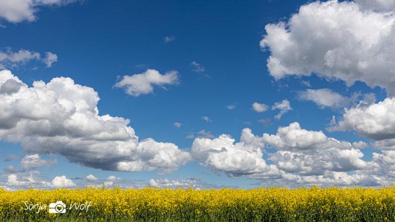 Rapsfeld und dramatische Wolken