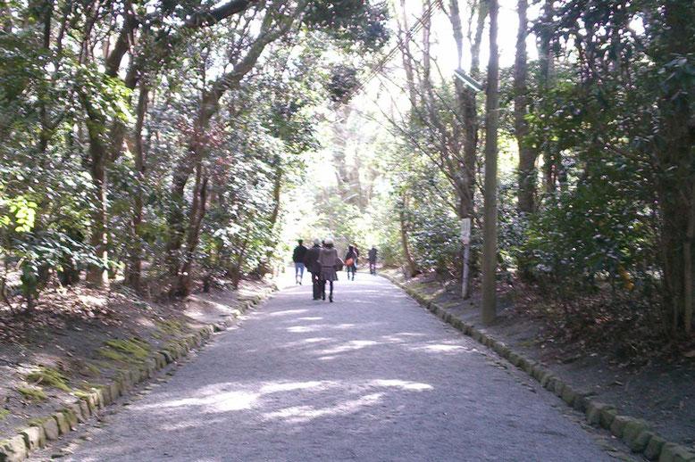宗像大社 高宮参道の写真