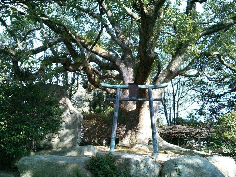 宮地嶽神社鳥居04番の写真