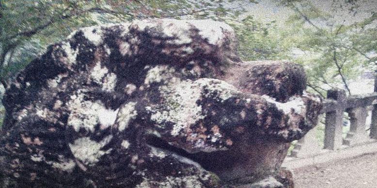 陶山神社の狛犬05番の写真