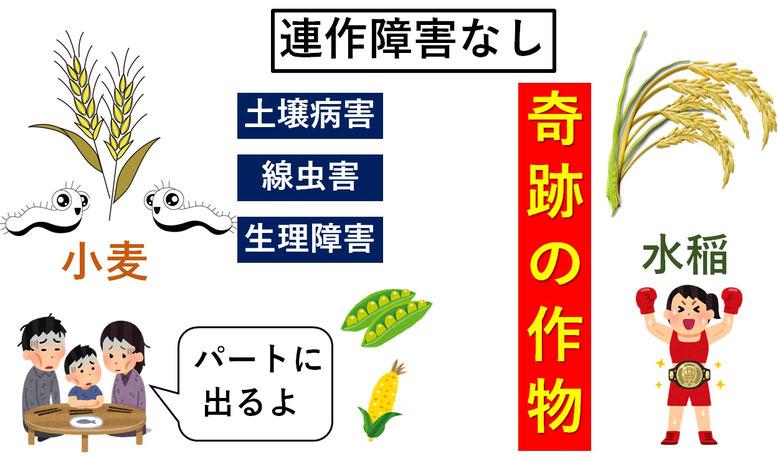 稲必須20