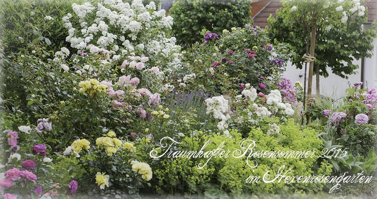 Rosen Hexenrosengarten Rosenblog Romantische Rosenschätze im Vorgarten