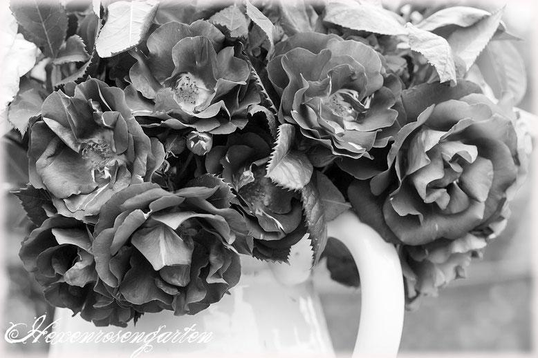 Rosenblog Hexenrosengarten  Rosiger Adventskalender Rose Rhapsody in Blue Strauß schwarz-weiß