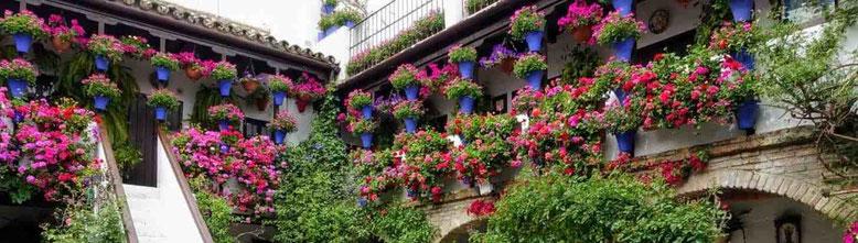 Free tour por los patios de Córdoba - Visitas guiadas. Recorridos. Excursiones.