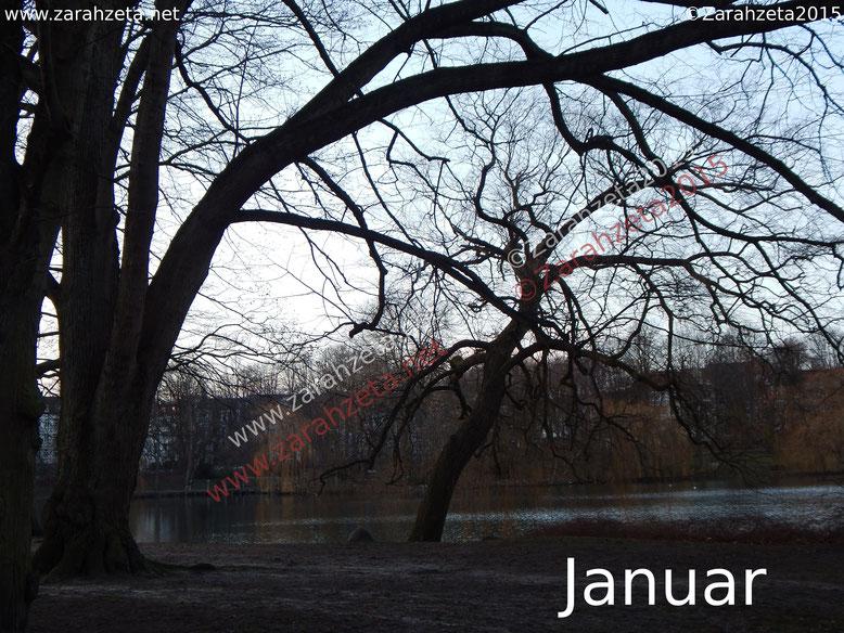 Kahle Bäume im Januar