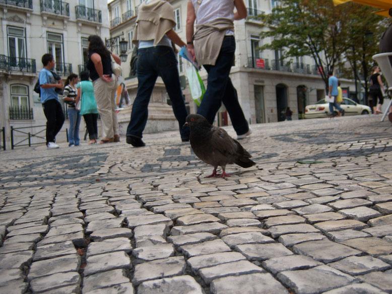 Kaum aus der Stadt wegzudenken - Die Taube