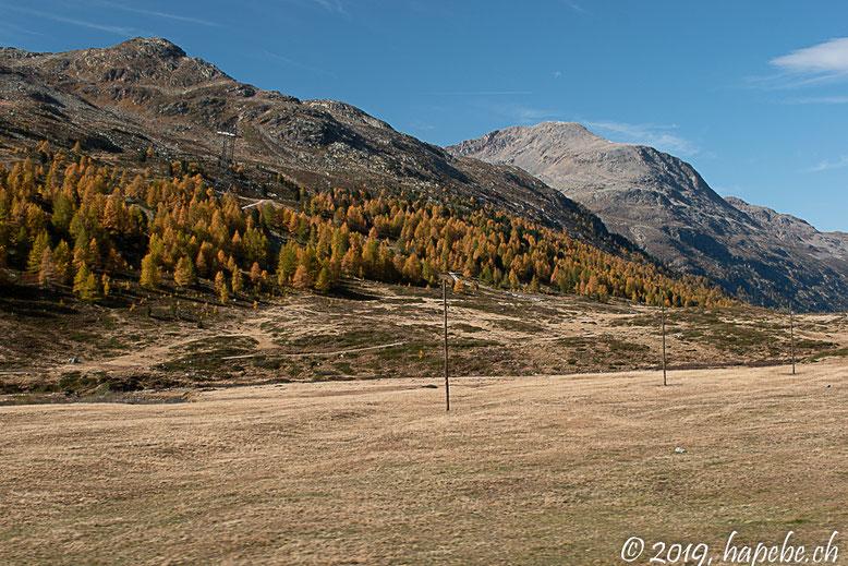 Der goldene Herbst  (Lärchen in der Wintervorbereitung).