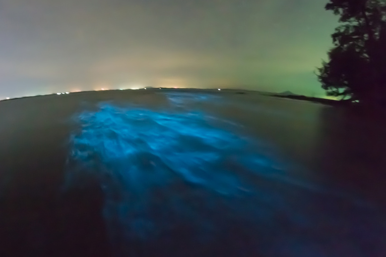 Is it Worth to Go to Puerto Rico - Bioluminescence