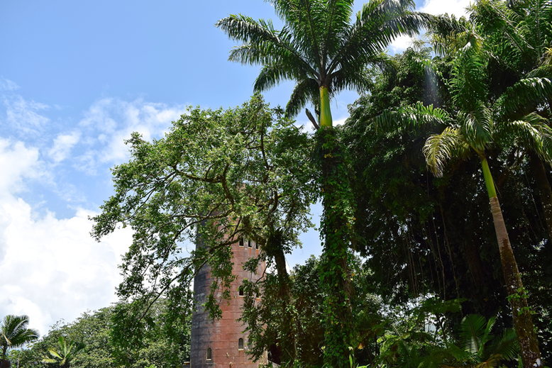Is it Worth to Go to Puerto Rico - Yokahu Observation Tower in el Yunque National Park