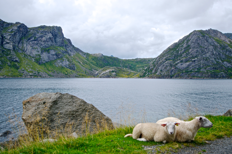 Hiking in the Lofoten - Close to Nesland