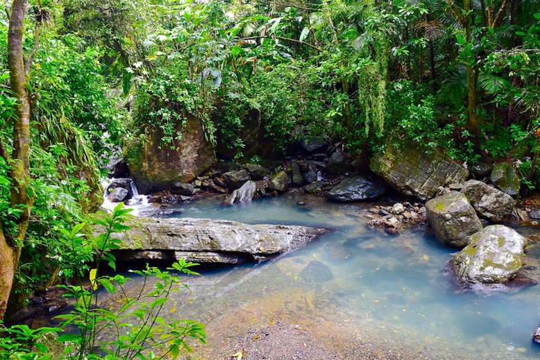 Is it Worth to Go to Puerto Rico - El Yunque National Forest