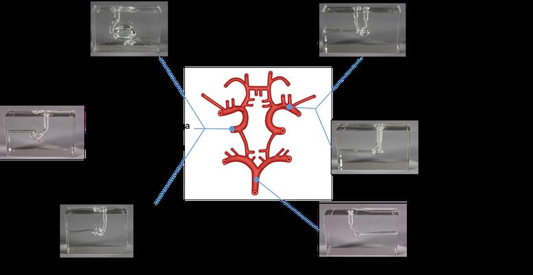 Modellpalette und deren Zuordnung am Circulus Willisii