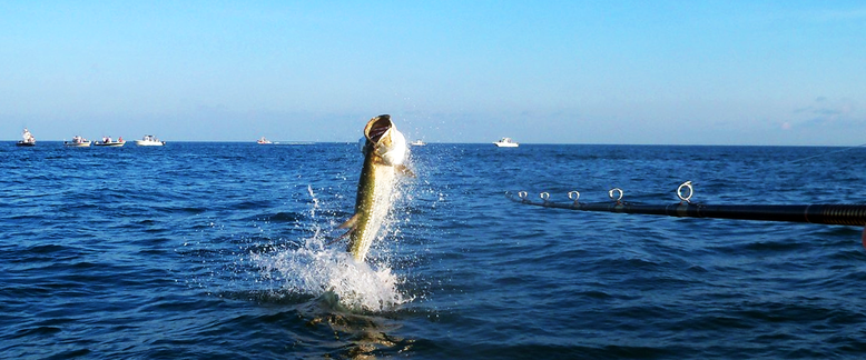 tarpon jumping after hook up on a boca grande fishing charter boat