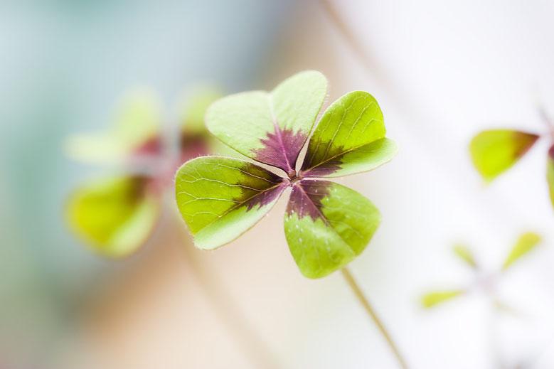 Blogbeitrag zum Weltglückstag ,  internationaler Tag des Glücks #lieberglücklich #Weltglückstag
