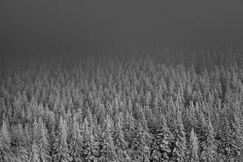 Bild: Black Forest I, 2012, Marc Junghans Fotografie