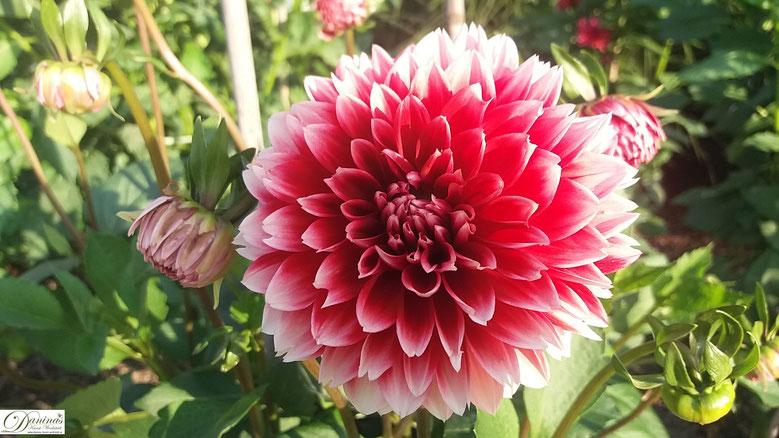 Salzburg - Wunderschönen Blumenbeete im Park Hellbrunn