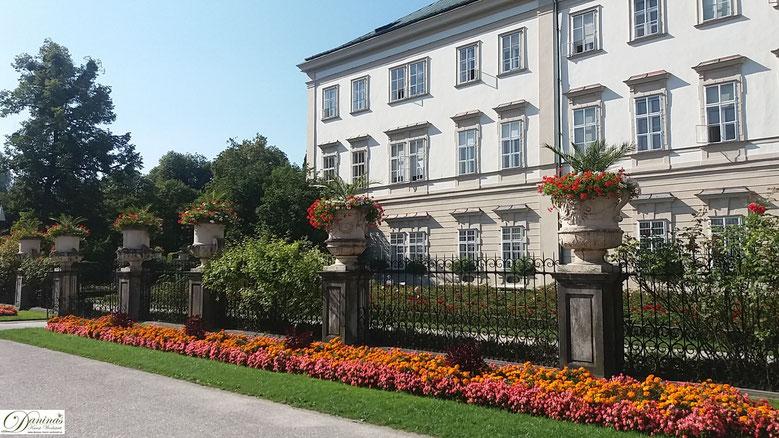 Salzburg, bezaubernder Rosengarten direkt vor dem Schloss Miarbell