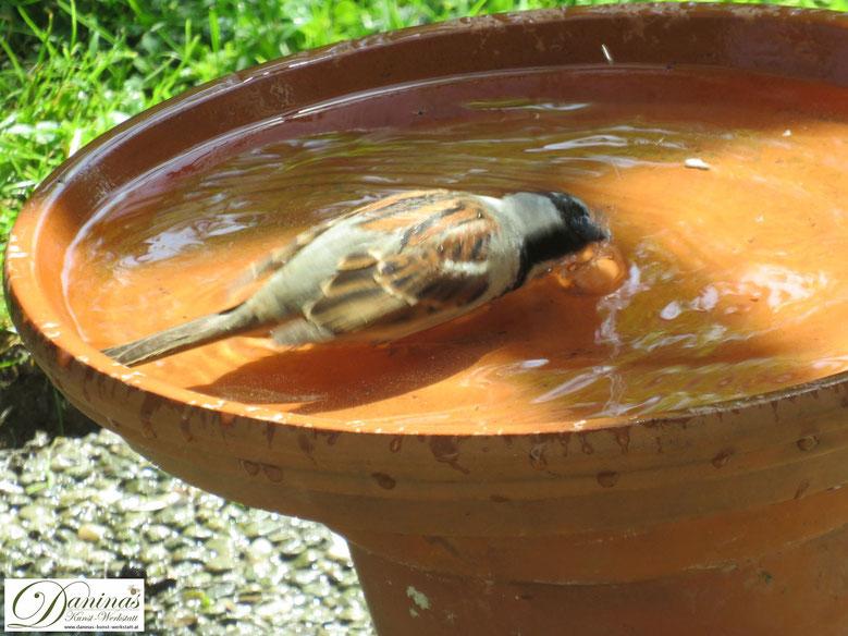 Durstiges Sperling Männchen besucht die Vogeltränke und nutzt es Vogelbad