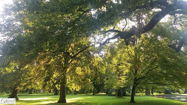 Salzburg Schlosspark Hellbrunn - alte prächtige Bäume und Weiher