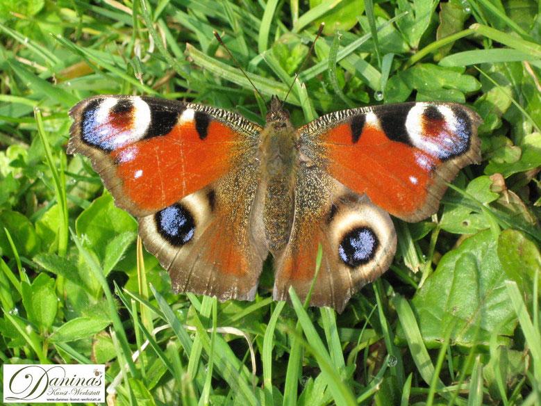 Schmetterlinge und andere Insekten schützen - zum Erhalt der Artenvielfalt