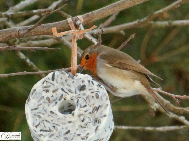 Fütterung der heimischen Vögel im Winter 2018/2019 - Rotkehlchen am Meisenring