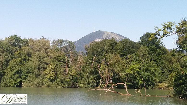Salzburg Leopoldskroner Weiher - stadtnahe Oase für Schwäne und andere Schwimmvögel