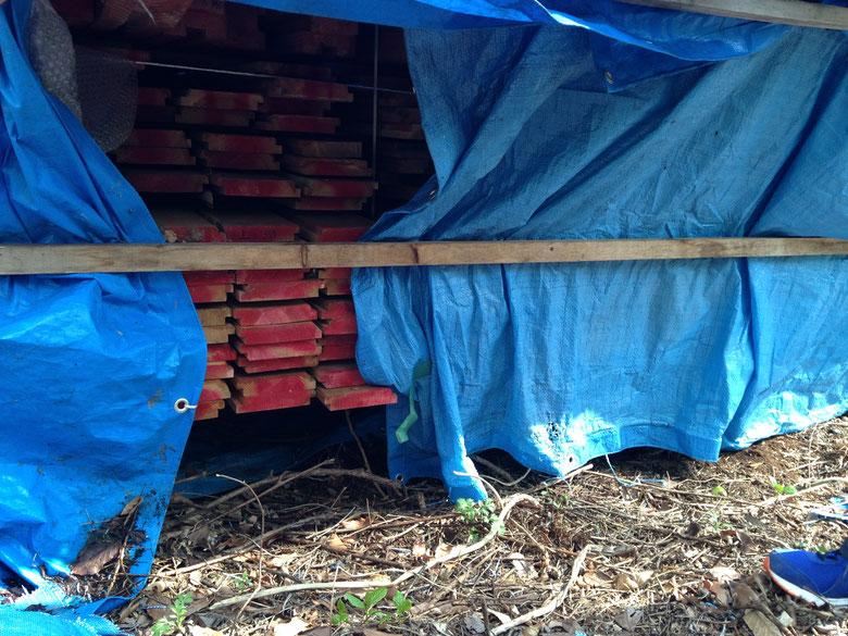 山の中の空き地に積まれていた材料。ブルーシートをはがしたら見たこともないくらい多様な昆虫が隠れていたそうです。