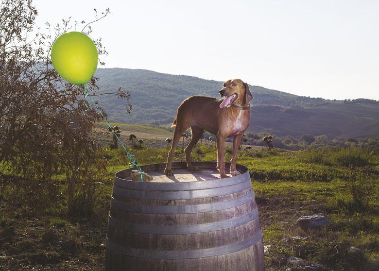 cane-botte-palloncino-verde-campagna-vino-canile