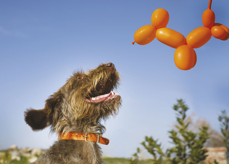 cane-palloncino-arancione-canile