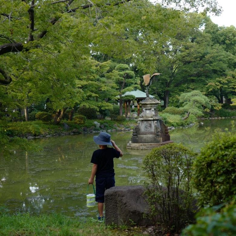 画像: 日比谷公園心字池の様子