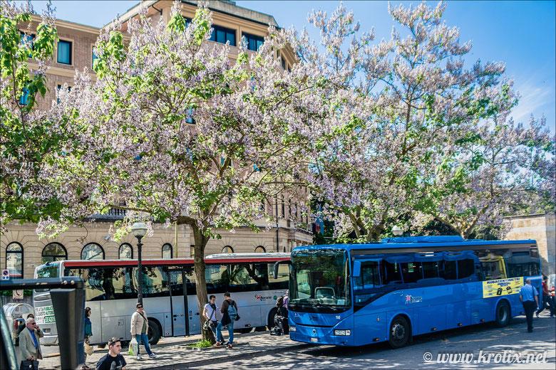 В этот цветующий сад прибывают автобусы из Флоренции.