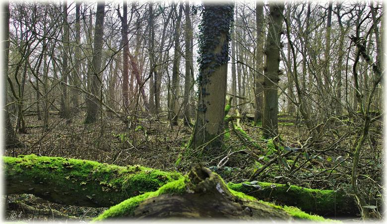 Der naturbelassene Wald