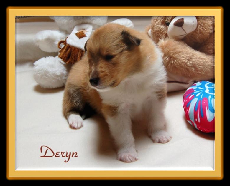 Deryn - 3 Wochen alt.