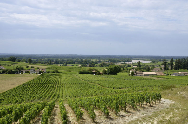 Fronsac vineyard looking down towards the river