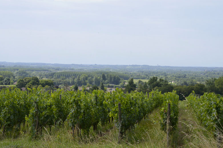 Fronsac countryside