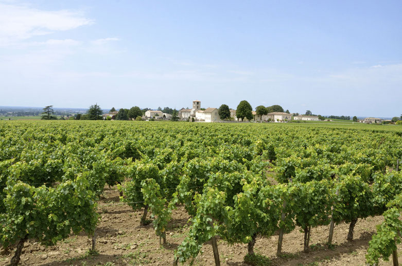 Vineyard scene, Saint Emilion