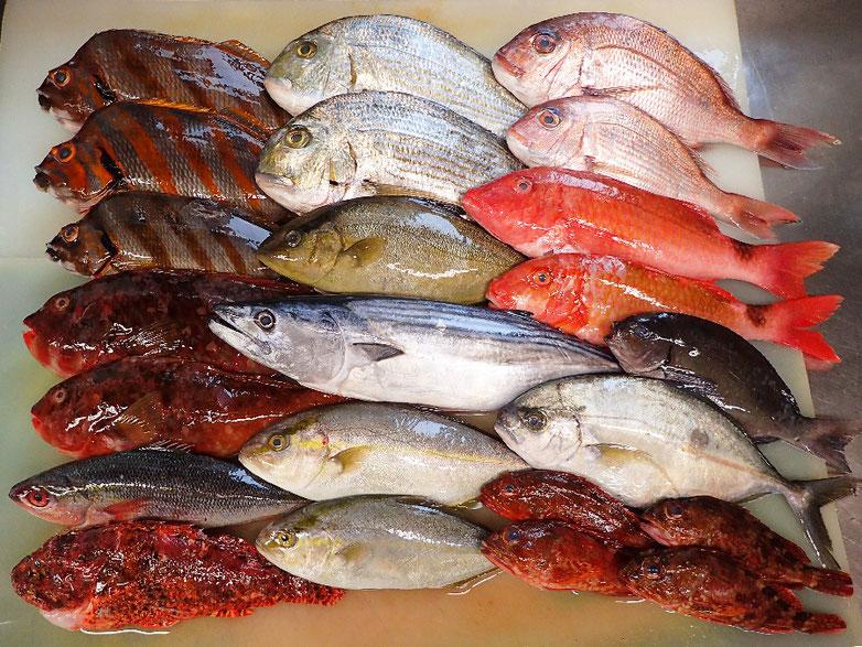 未利用魚 活用 SDGs