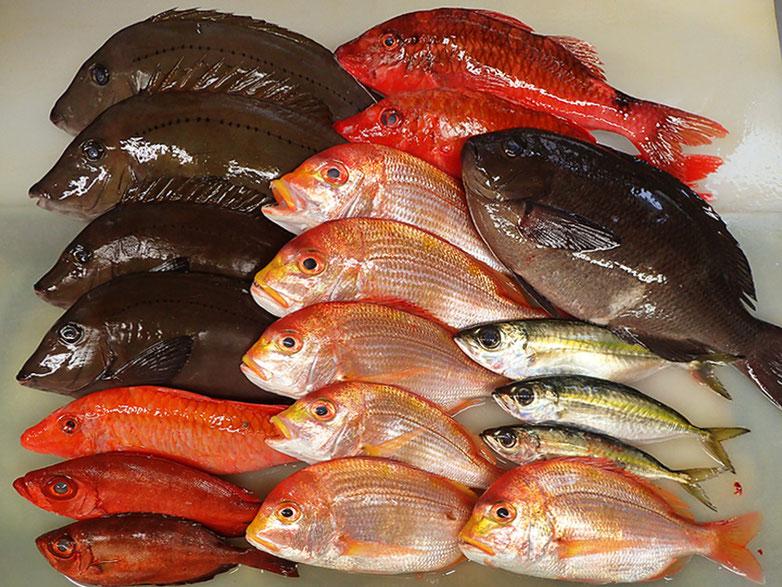 未利用魚 寿司 出前