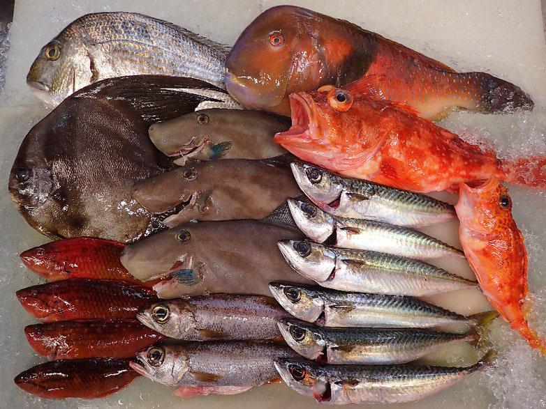 寿司 デリバリー 未利用魚