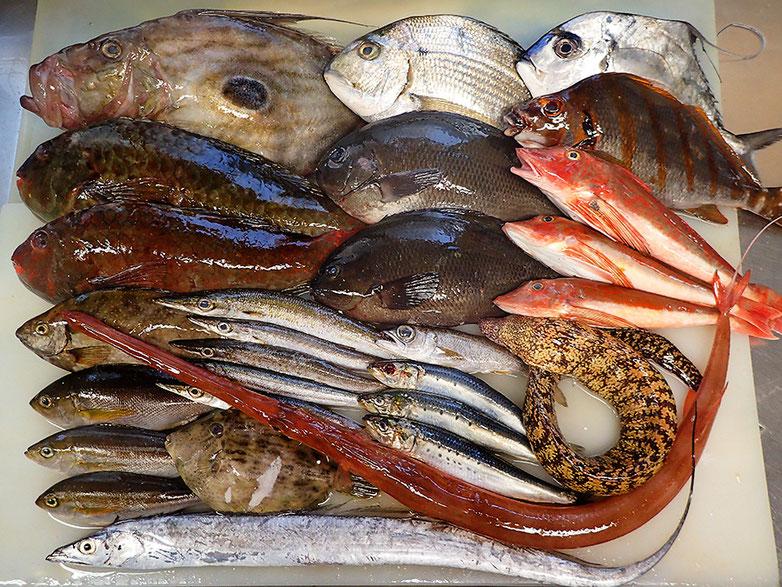 未利用魚 積極利用 寿司の出前