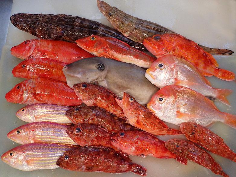 未利用魚 活用