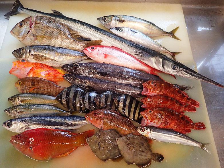 未利用魚 宅配寿司