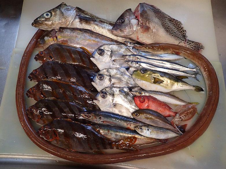 未利用魚 有効利用