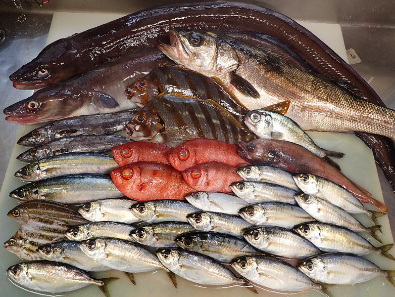 未利用魚 取扱店 寿司 出前