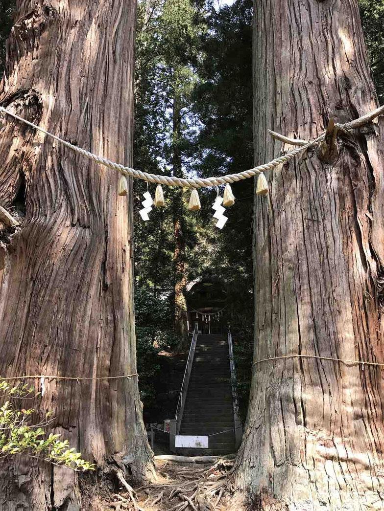 夏井諏訪神社の翁(じじ)スギと媼(ばば)スギ